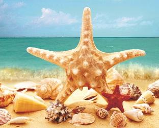 Звезда на фоне моря