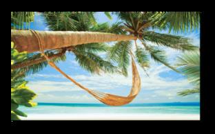 пальма с гамаком