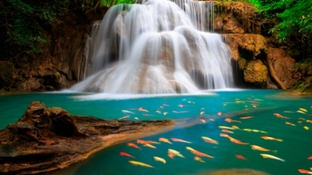 водопад и рыбы