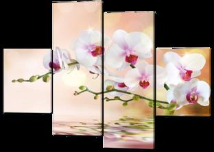 Орхидея отражение вода