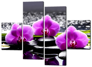 Три орхидеи