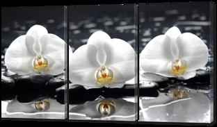 Белые орхидеи на чёрном фоне 184* 100 см