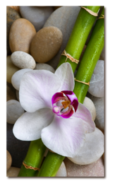 бамбук и орхидея на камнях