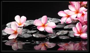 цветы на камнях и отражение