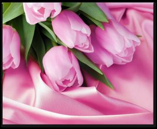 розовые тюльпаны на шёлке