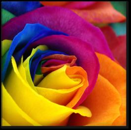 разноцветные лепестки