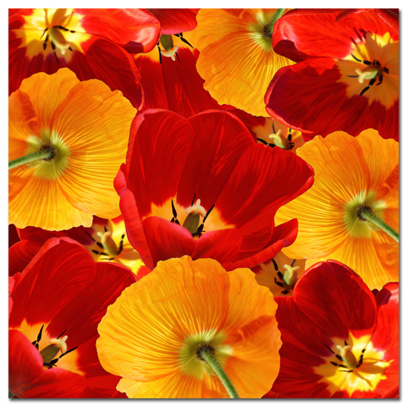 тюльпаны жёлтые и красные