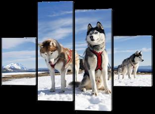 Собаки Хаски 126* 93,5 см
