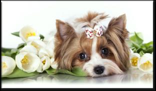 собачка с тюльпанами