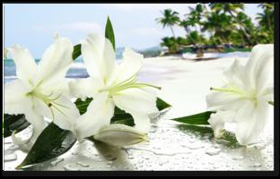 лилии на пляже
