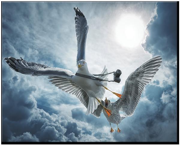 Чайка и альбатрос 50* 40 см
