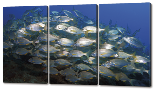 Рыбы 124 * 70 см.