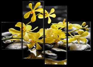 Желтые цветы на камнях