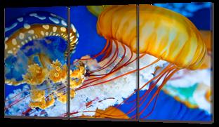 Медузы 126* 70 см