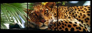 Ягуар на дереве 193 * 63 см