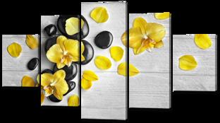 Жёлтые орхидеи на чёрных камнях