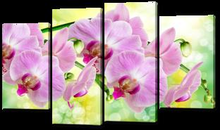 Орхидеи розовые 126* 76,5 см