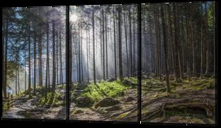 Лес после дождя 124* 70 см