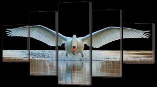 Лебедь приземляется на воду