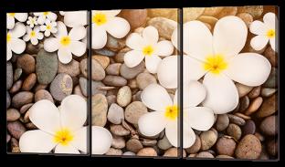 Цветы на морских камнях