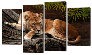 Лев на бревне