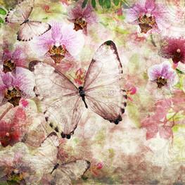 Бабочки и орхидеи
