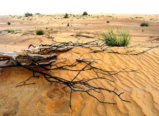 ветки на песке