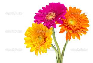 три цветка на белом