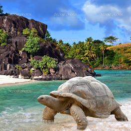 большие черепаха тропическом ландшафте