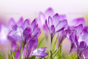 цветы поляна