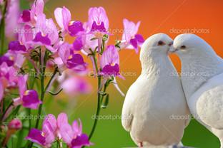 голуби цветы