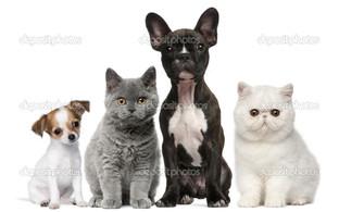 группа собаки кошки белый фон