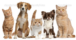 кошки собаки на белом фоне