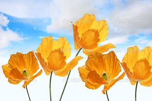жёлтые маки в небе