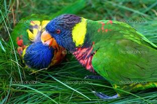 яркие попугаи