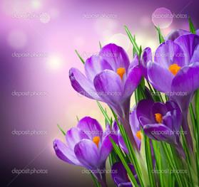 крокусы на фиолетовом