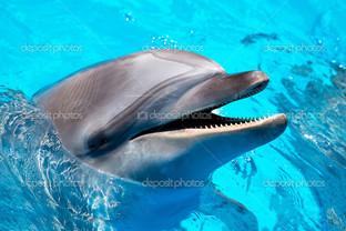 дельфин в голубой воде