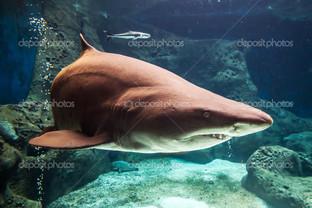 акула подводный мир