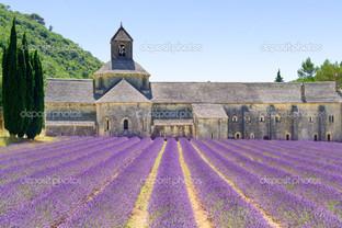 аббатство из Сенанк лаванда цветы