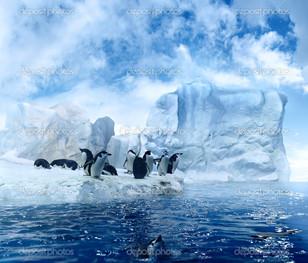 пингвин на голубой льдине