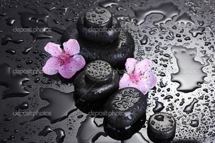 два цветка сакуры на чёрной гальке
