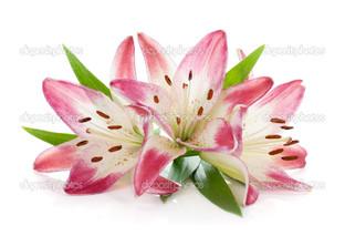 три лилии на белом