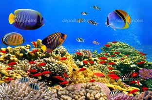 кораллы колонии на рифе