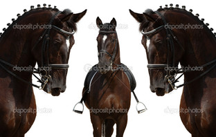 три черных скакуна