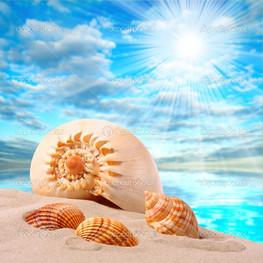 мини раковины тропическом пляже
