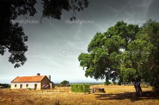 крона дерева и дом