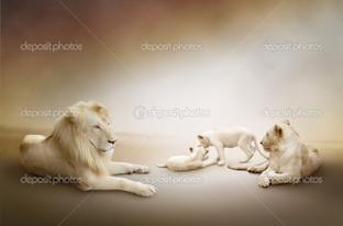 белые львы прайд