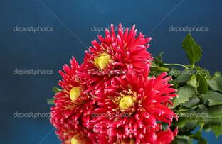 ярко красные цветы