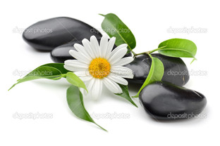 ромашка на чёрных камнях листья