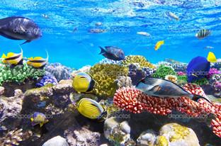 кораллы и рыбы в Красном море